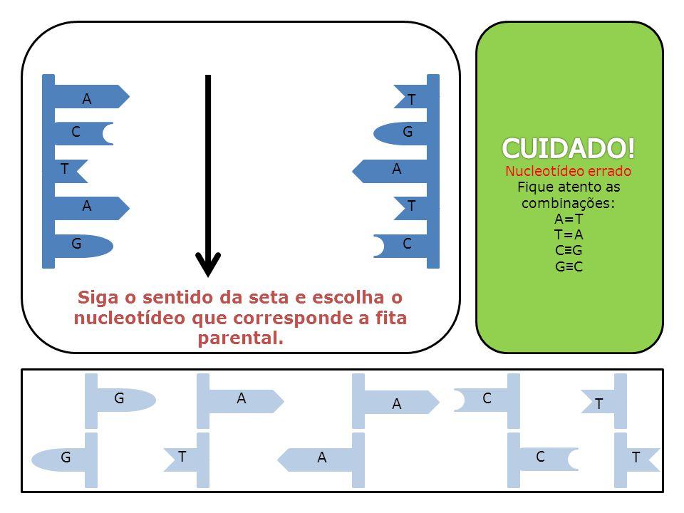 A A A T T T GC GC Siga o sentido da seta e escolha o nucleotídeo que corresponde a fita parental. A C T AG T GA TC