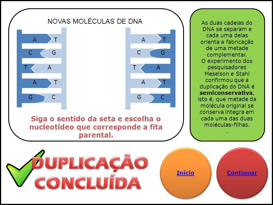 A A A T T T GC GC A C T AG GA TC T As duas cadeias do DNA se separam e cada uma delas orienta a fabricação de uma metade complementar. O experimento d
