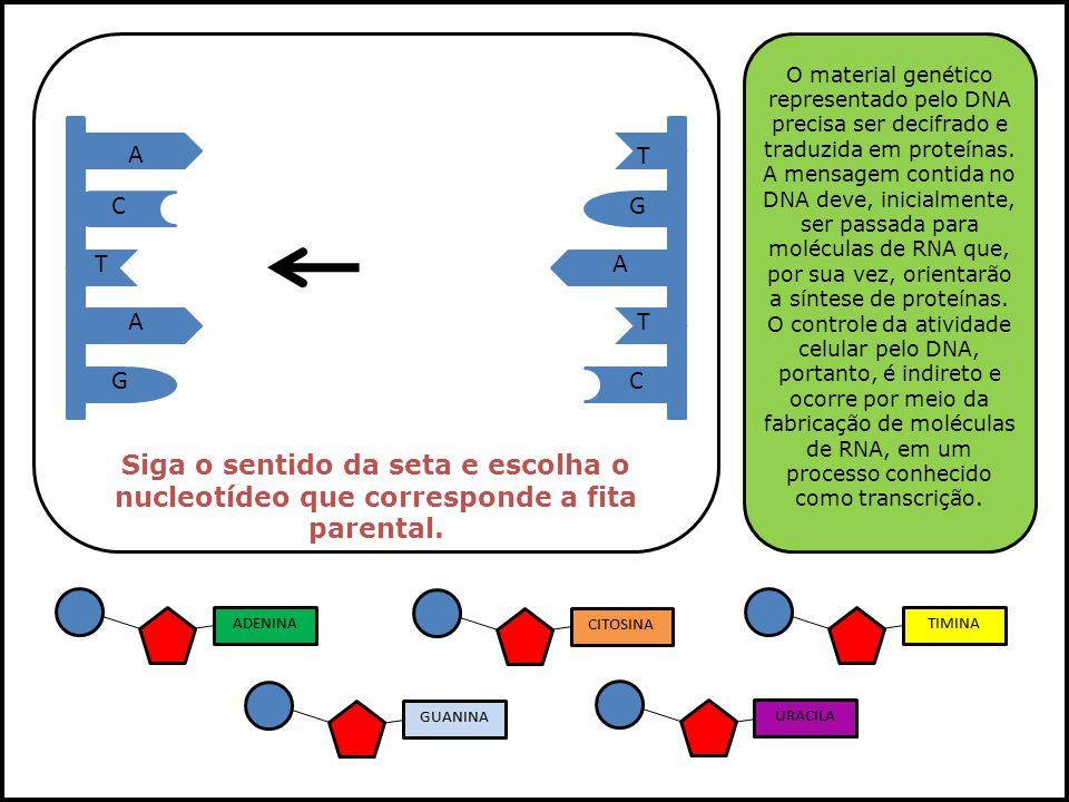 A A A T T T GC GC Siga o sentido da seta e escolha o nucleotídeo que corresponde a fita parental. O material genético representado pelo DNA precisa se