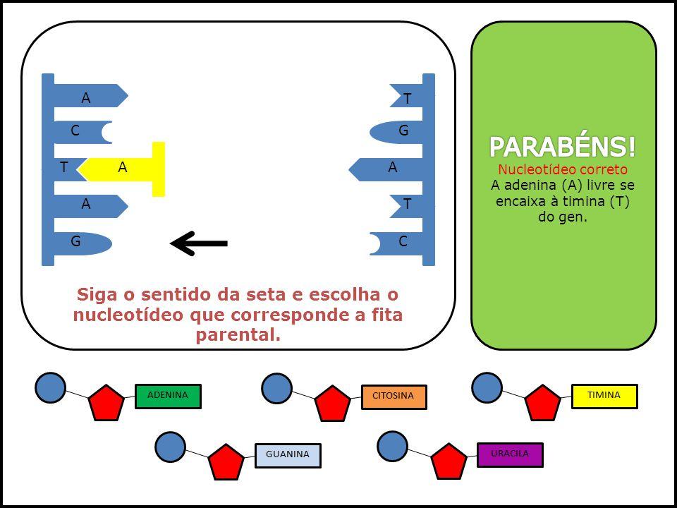 A A A T T T GC GC Siga o sentido da seta e escolha o nucleotídeo que corresponde a fita parental. A