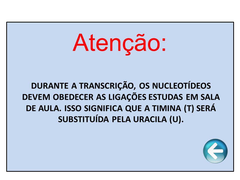 Atenção: DURANTE A TRANSCRIÇÃO, OS NUCLEOTÍDEOS DEVEM OBEDECER AS LIGAÇÕES ESTUDAS EM SALA DE AULA. ISSO SIGNIFICA QUE A TIMINA (T) SERÁ SUBSTITUÍDA P