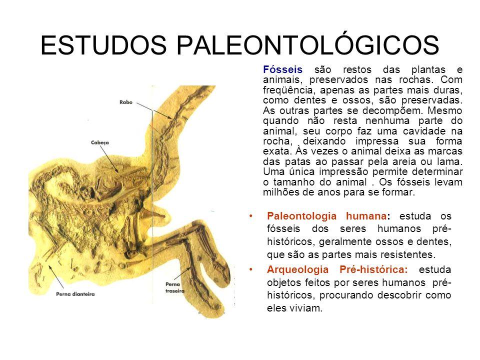 ESTUDOS PALEONTOLÓGICOS Paleontologia humana: estuda os fósseis dos seres humanos pré- históricos, geralmente ossos e dentes, que são as partes mais resistentes.