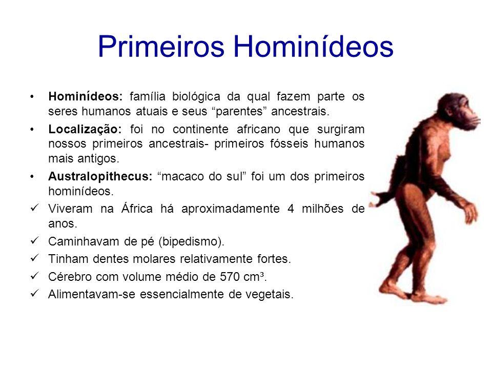 O Gênero Homo Gênero Homo: árvore da família dos hominídeos que chegou até os seres humanos atuais.
