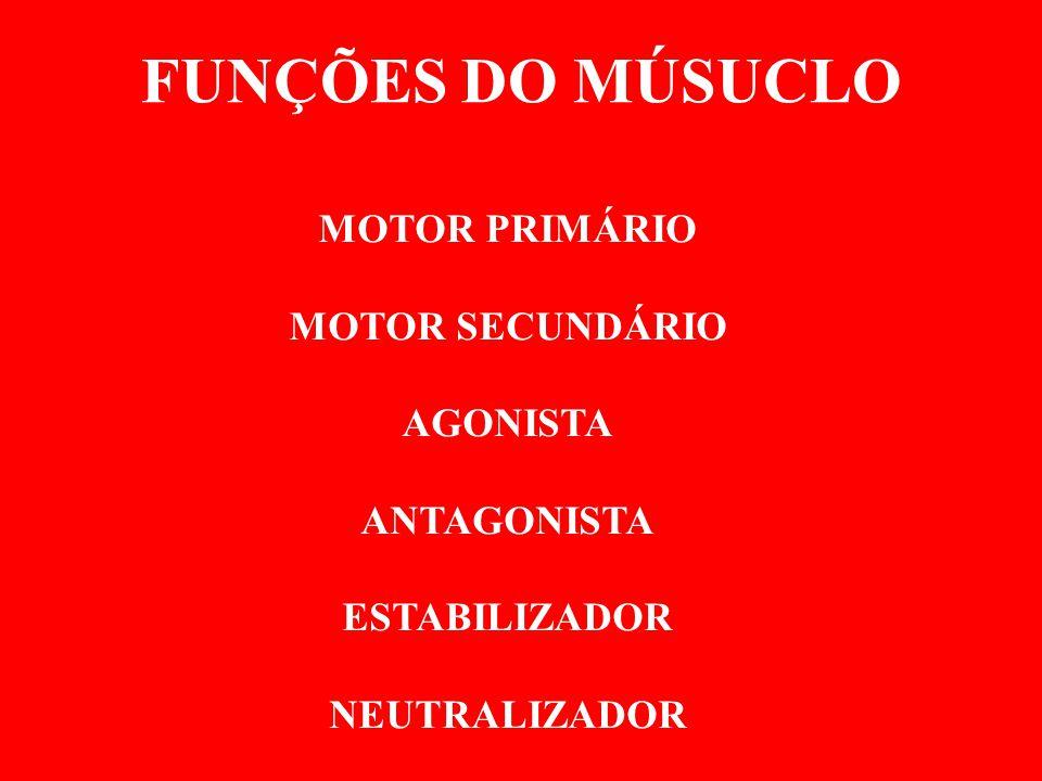 FUNÇÕES DO MÚSUCLO MOTOR PRIMÁRIO MOTOR SECUNDÁRIO AGONISTA ANTAGONISTA ESTABILIZADOR NEUTRALIZADOR