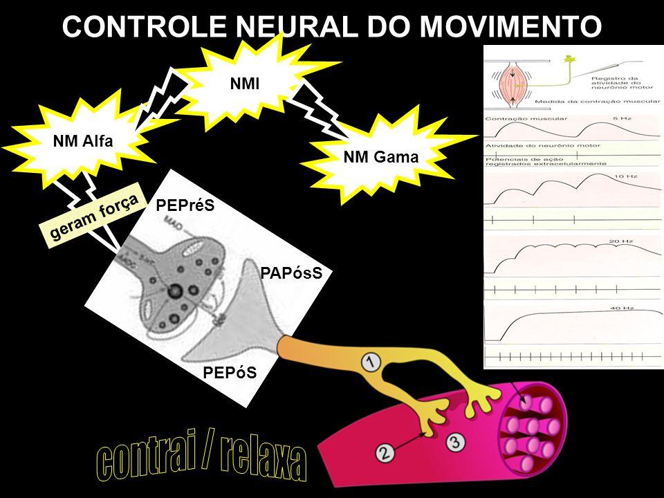 CONTROLE NEURAL DO MOVIMENTO NMI NM Gama NM Alfa geram força PEPréS PEPóS PAPósS