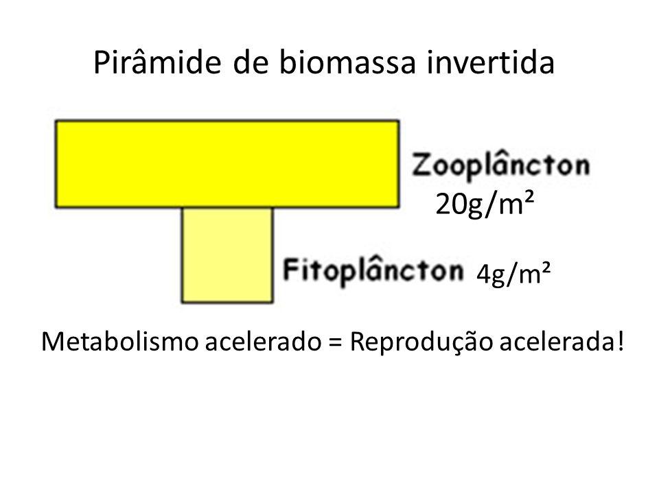 Pirâmide de biomassa invertida Metabolismo acelerado = Reprodução acelerada! 4g/m² 20g/m²