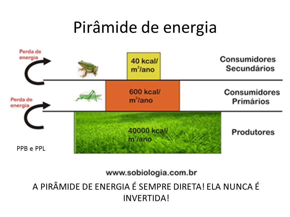 Pirâmide de energia A PIRÂMIDE DE ENERGIA É SEMPRE DIRETA! ELA NUNCA É INVERTIDA! PPB e PPL