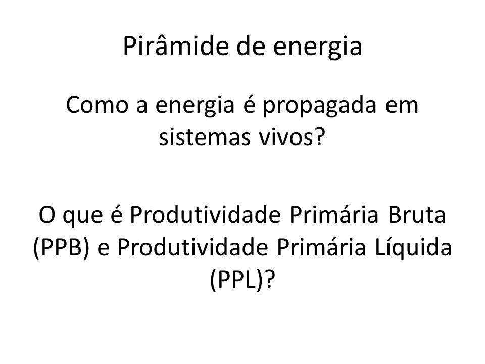 Como a energia é propagada em sistemas vivos? O que é Produtividade Primária Bruta (PPB) e Produtividade Primária Líquida (PPL)? Pirâmide de energia