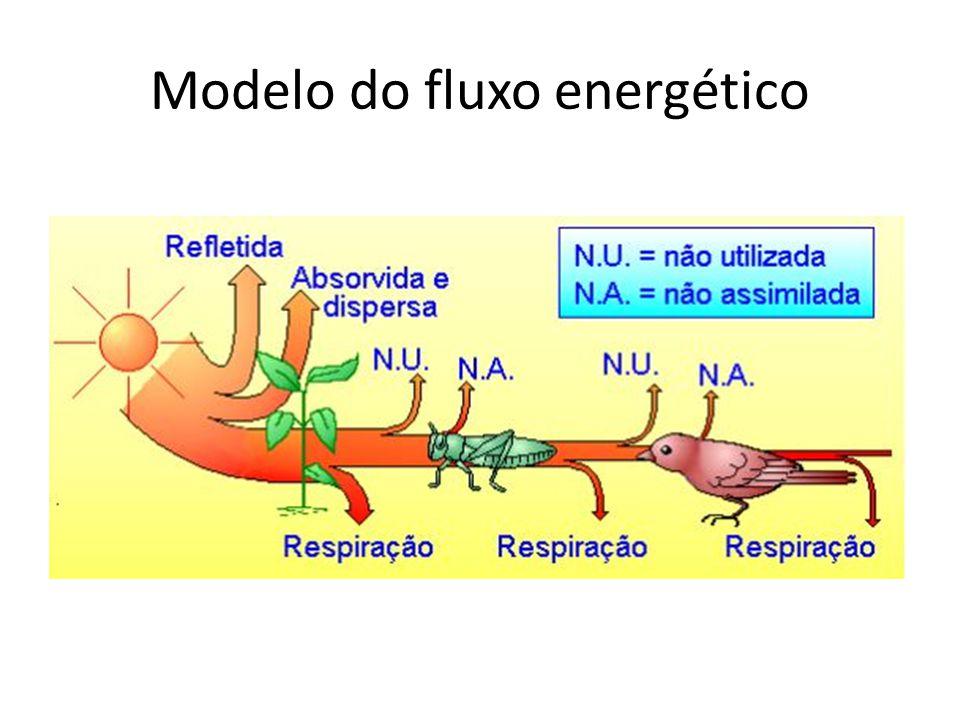 Modelo do fluxo energético