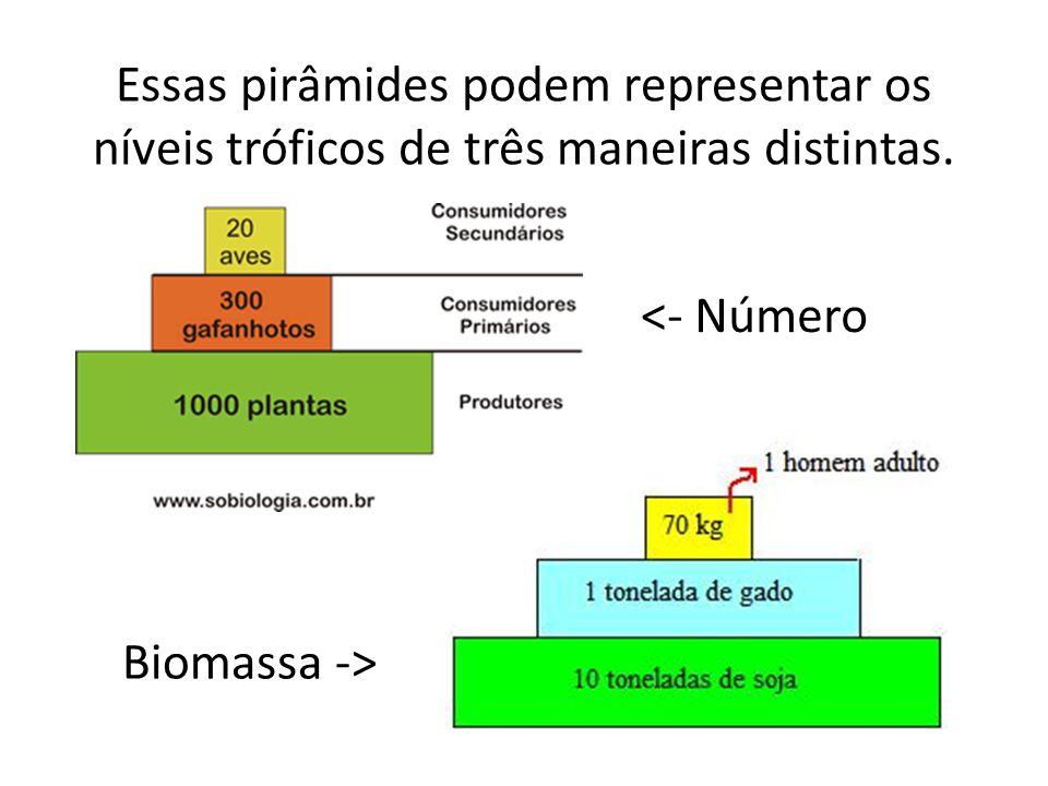 Essas pirâmides podem representar os níveis tróficos de três maneiras distintas. <- Número Biomassa ->