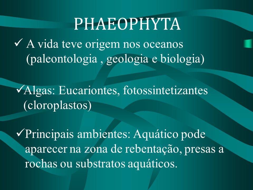 Principais ambientes: Aquático pode aparecer na zona de rebentação, presas a rochas ou substratos aquáticos. A vida teve origem nos oceanos (paleontol