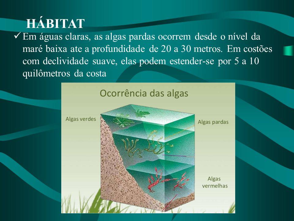 HÁBITAT Em águas claras, as algas pardas ocorrem desde o nível da maré baixa ate a profundidade de 20 a 30 metros. Em costões com declividade suave, e