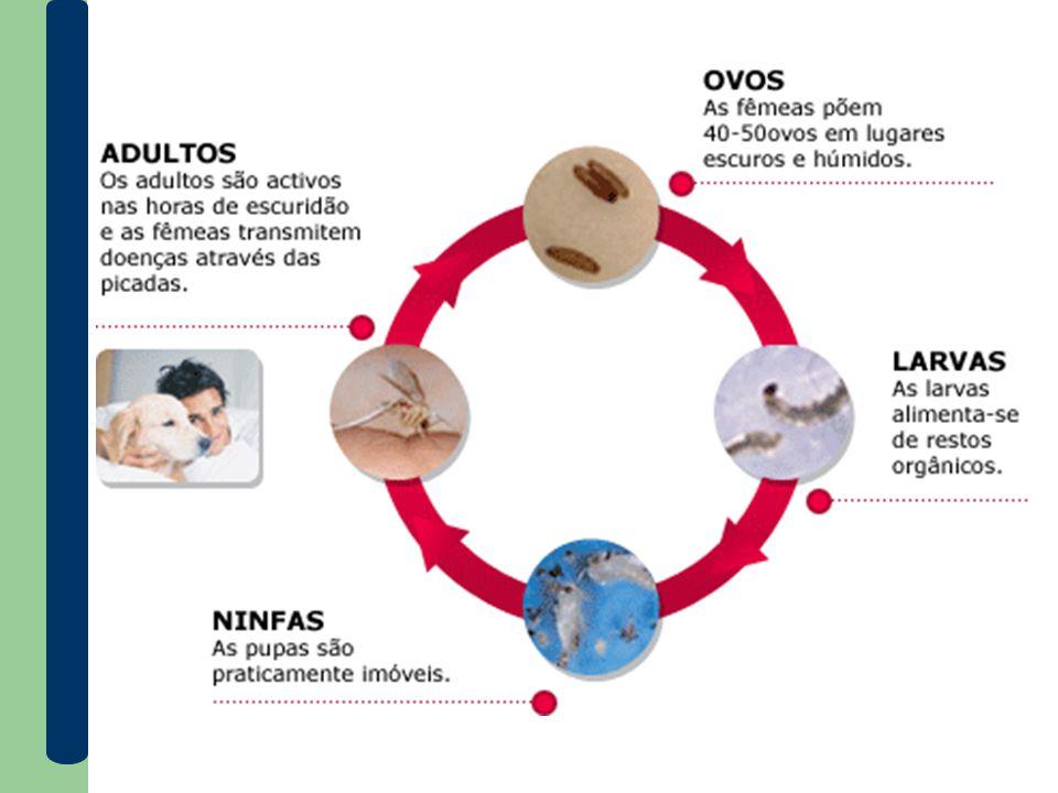 Manifestações da doença → Leishmaniose tegumentar ou cutânea é caracterizada por lesões na pele, podendo também afetar nariz, boca e garganta, conhecida como ferida brava .