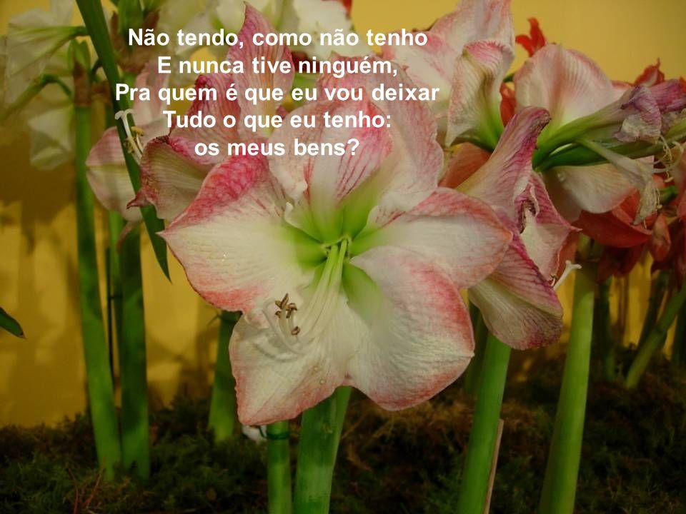 Pra quem eu vou deixar, Se fizer um testamento, Os bancos dos meus jardins, Onde durmo e onde acordo Entre rosas e jasmins.