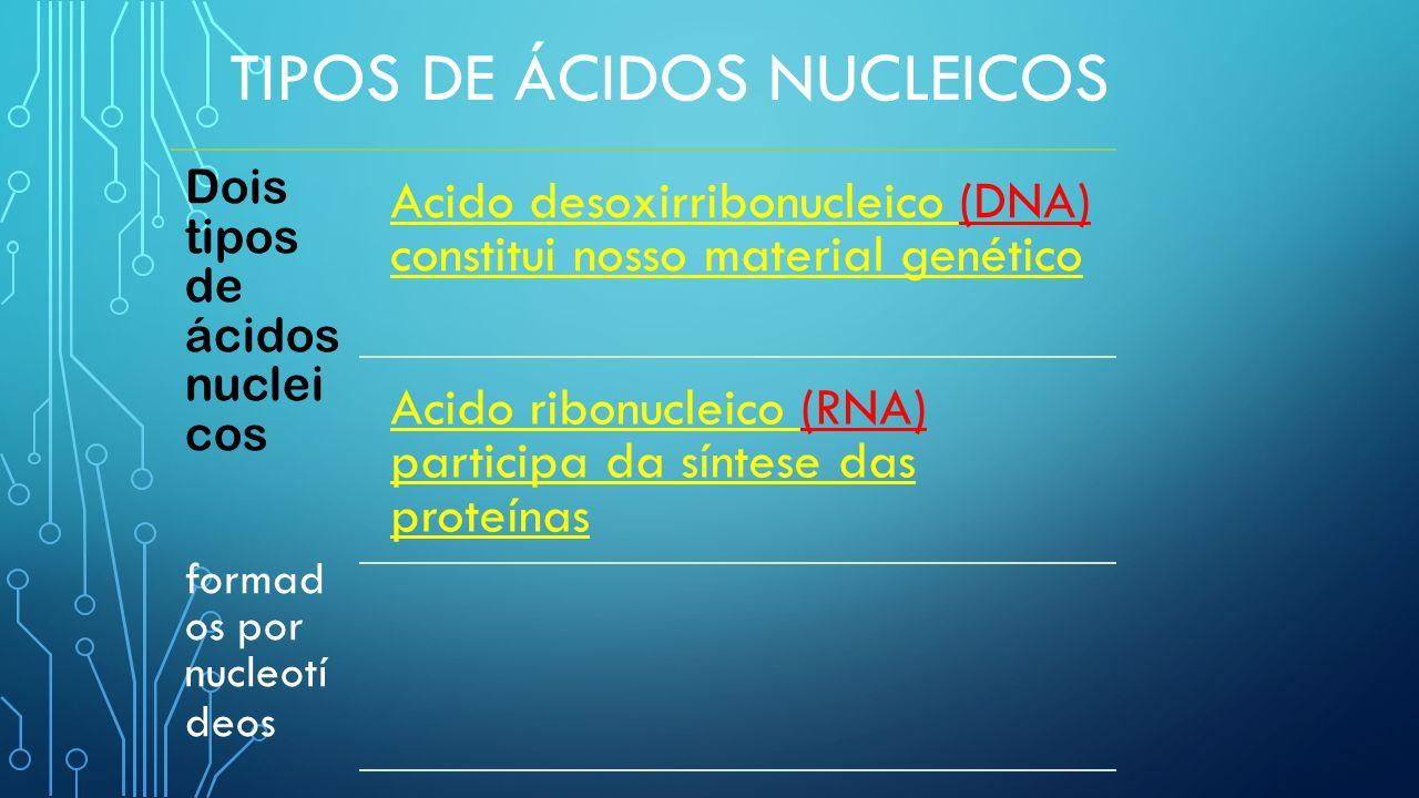 TIPOS DE ÁCIDOS NUCLEICOS Dois tipos de ácidos nuclei cos formad os por nucleotí deos Acido desoxirribonucleico (DNA) constitui nosso material genético Acido ribonucleico (RNA) participa da síntese das proteínas