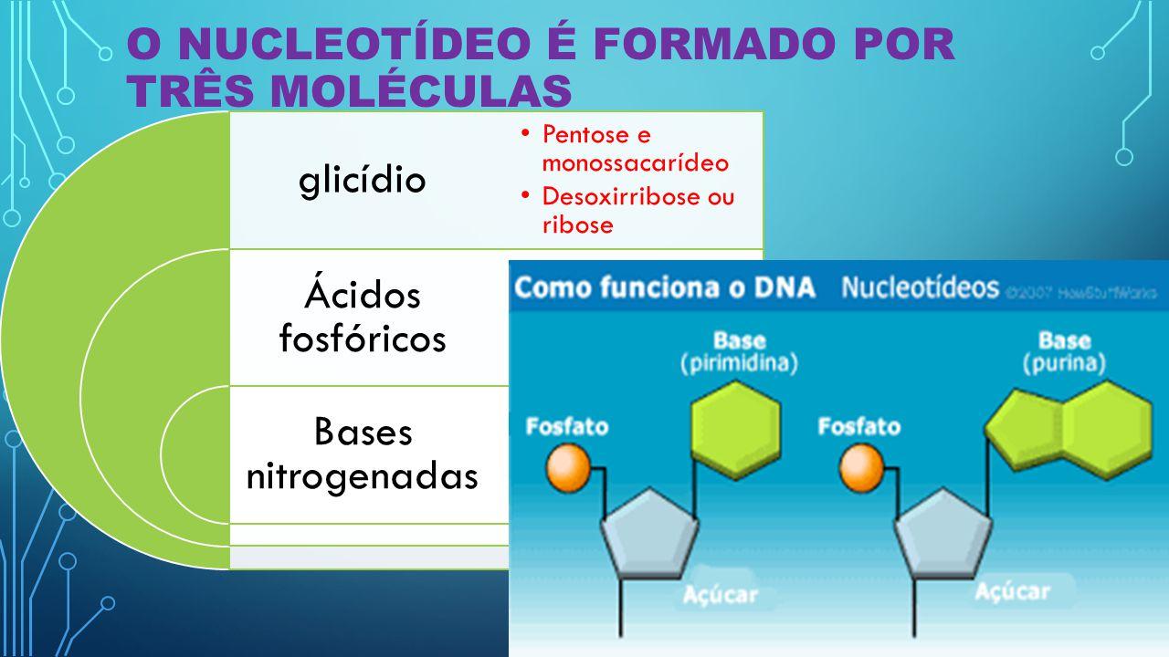 Tipos de ácidos nucleicos Moléculas que formam os nucleotídeos DNA Adenina (A) Guanina (G) Citosina (C) Timina (T) RNA Adenina (A) Guanina (G) Citosina (C) Uracila (U)
