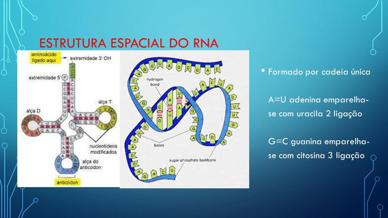 ESTRUTURA ESPACIAL DO RNA Formado por cadeia única A=U adenina emparelha- se com uracila 2 ligação G=C guanina emparelha- se com citosina 3 ligação