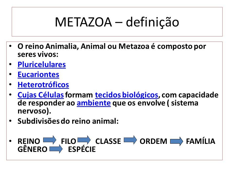 METAZOA – definição O reino Animalia, Animal ou Metazoa é composto por seres vivos: Pluricelulares Eucariontes Heterotróficos Cujas Células formam tecidos biológicos, com capacidade de responder ao ambiente que os envolve ( sistema nervoso).