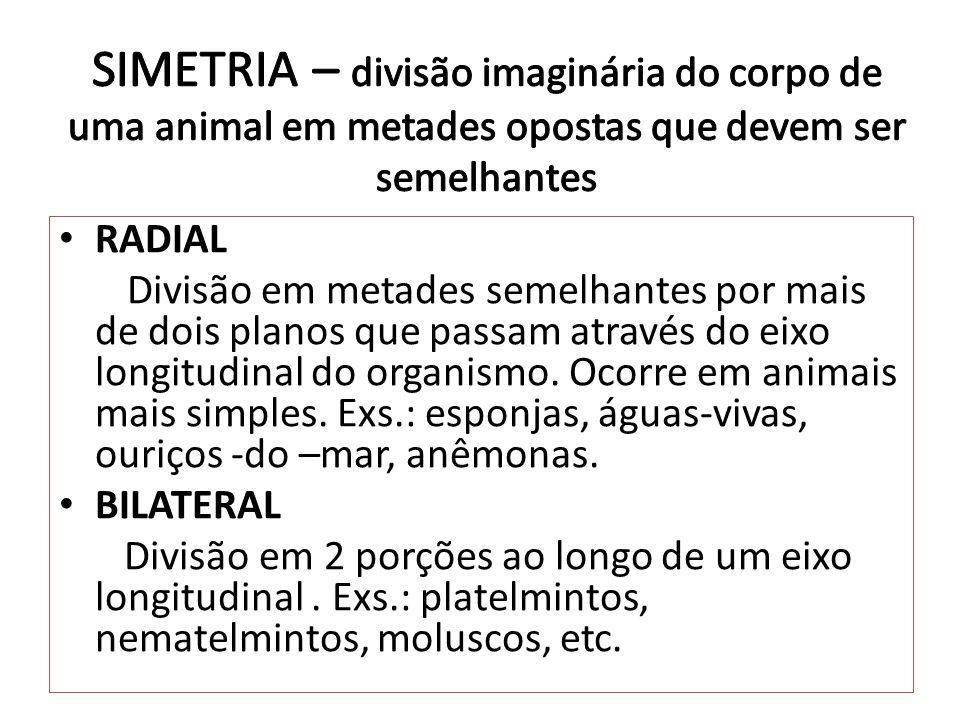 RADIAL Divisão em metades semelhantes por mais de dois planos que passam através do eixo longitudinal do organismo. Ocorre em animais mais simples. Ex