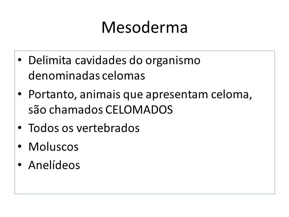 Mesoderma Delimita cavidades do organismo denominadas celomas Portanto, animais que apresentam celoma, são chamados CELOMADOS Todos os vertebrados Moluscos Anelídeos