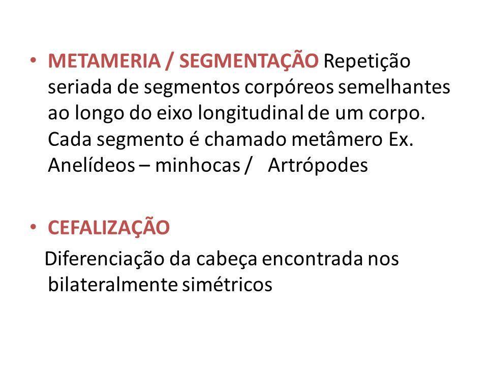 METAMERIA / SEGMENTAÇÃO Repetição seriada de segmentos corpóreos semelhantes ao longo do eixo longitudinal de um corpo. Cada segmento é chamado metâme