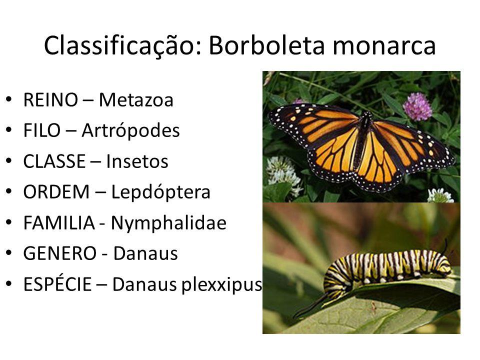 Classificação: Borboleta monarca REINO – Metazoa FILO – Artrópodes CLASSE – Insetos ORDEM – Lepdóptera FAMILIA - Nymphalidae GENERO - Danaus ESPÉCIE –