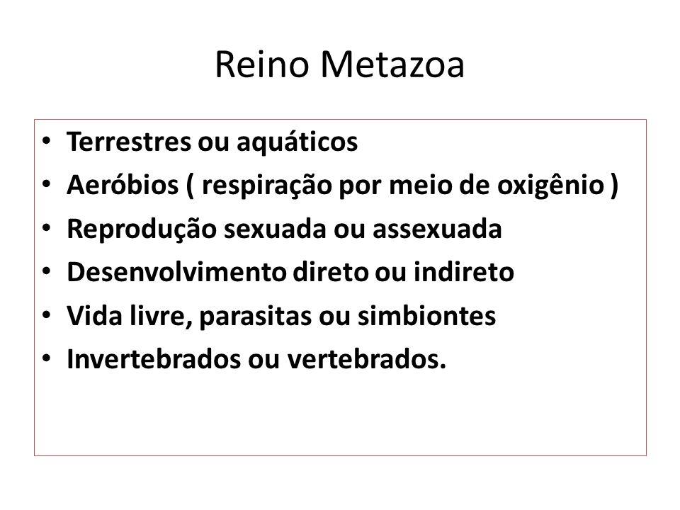 Reino Metazoa Terrestres ou aquáticos Aeróbios ( respiração por meio de oxigênio ) Reprodução sexuada ou assexuada Desenvolvimento direto ou indireto Vida livre, parasitas ou simbiontes Invertebrados ou vertebrados.