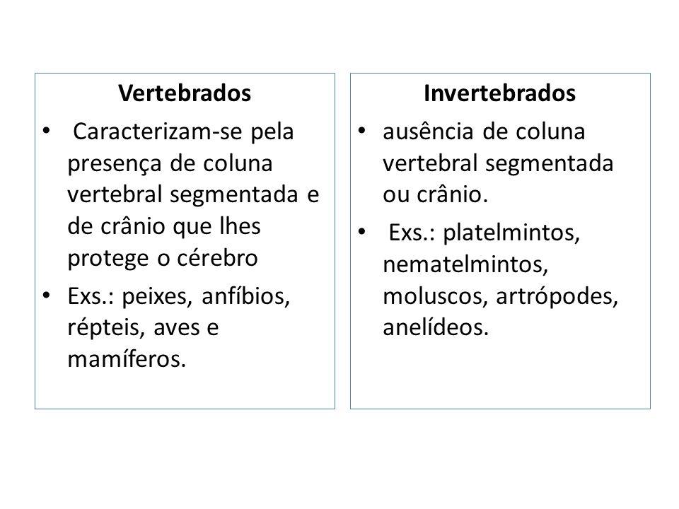 Vertebrados Caracterizam-se pela presença de coluna vertebral segmentada e de crânio que lhes protege o cérebro Exs.: peixes, anfíbios, répteis, aves