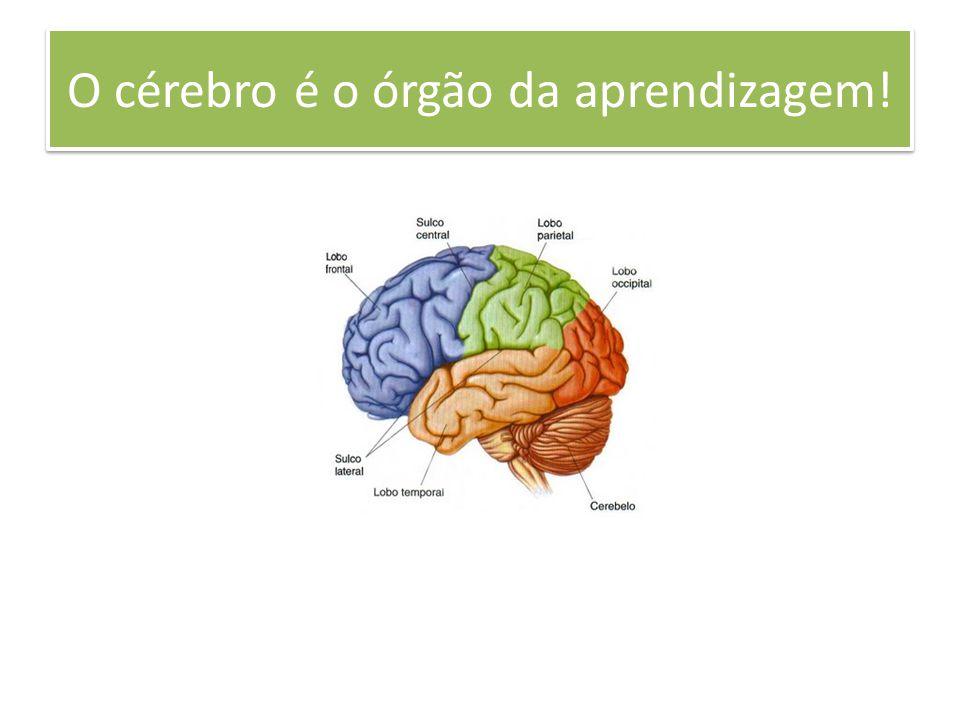O cérebro é o órgão da aprendizagem!