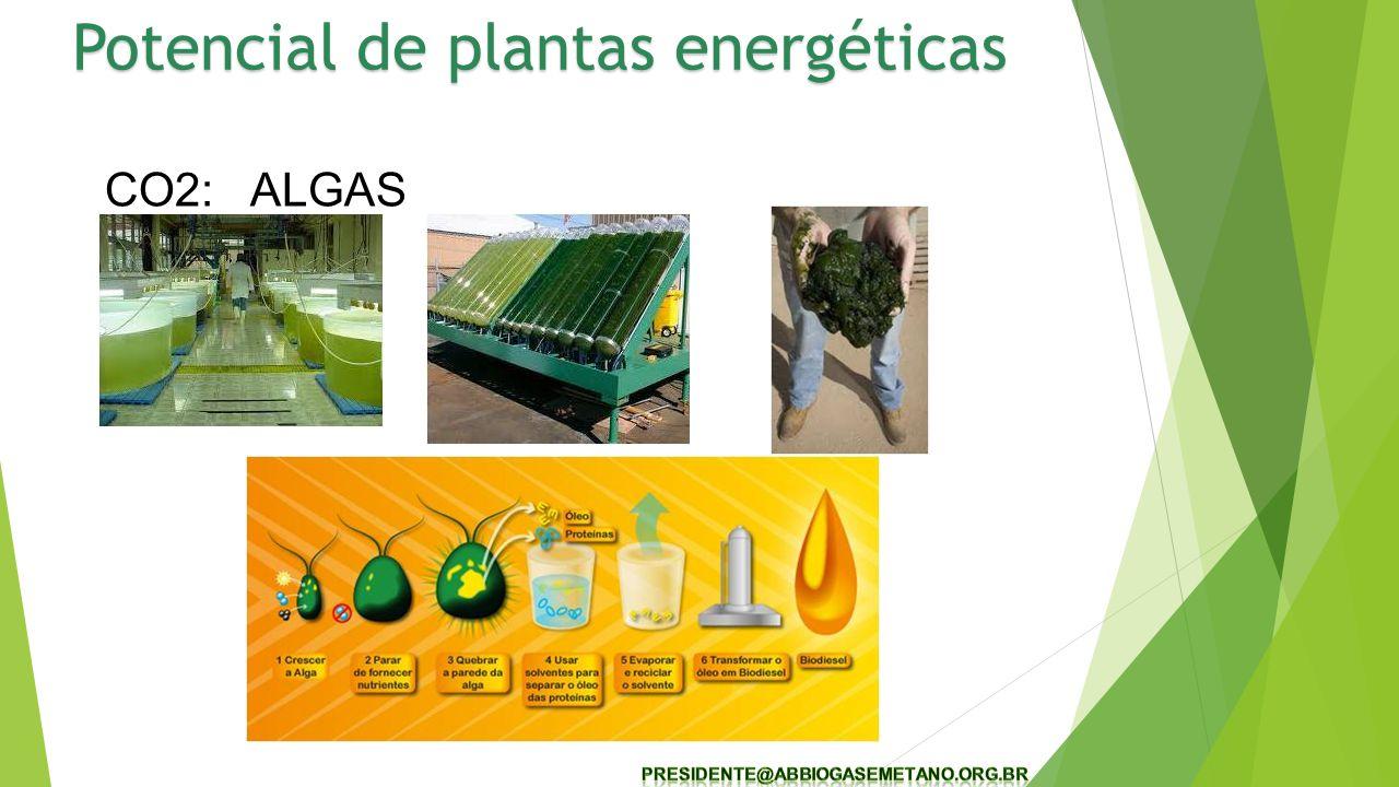 CO2: ALGAS Potencial de plantas energéticas