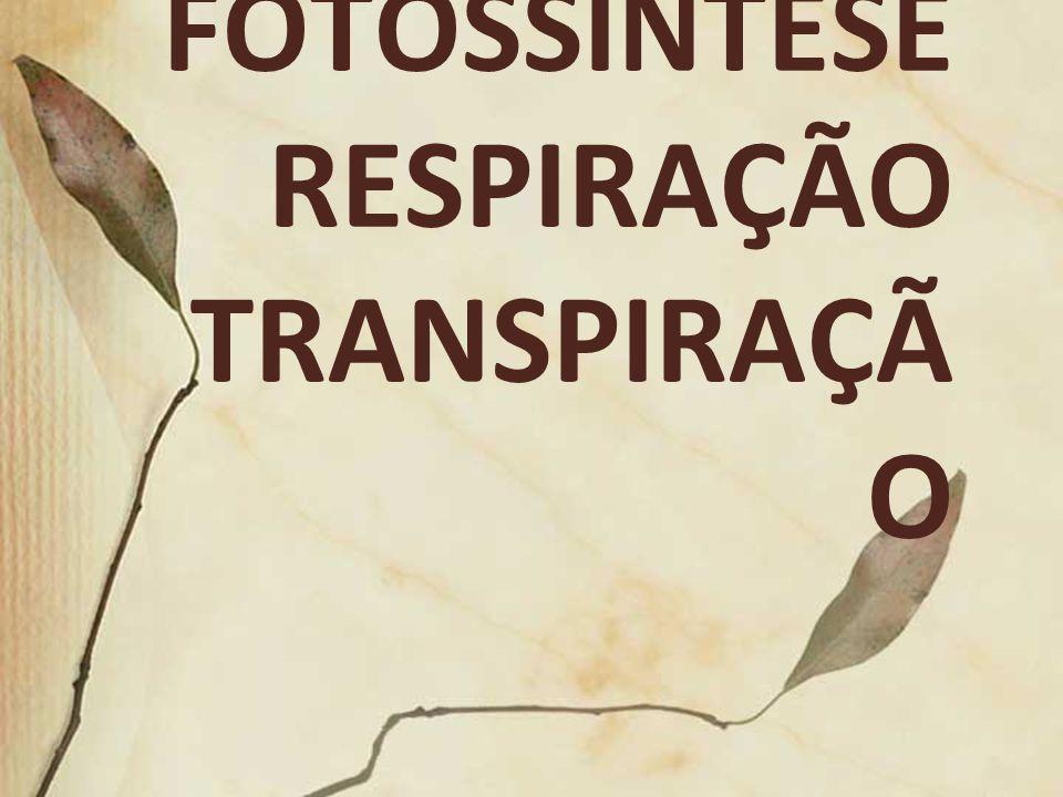 FOTOSSÍNTESE RESPIRAÇÃO TRANSPIRAÇÃ O