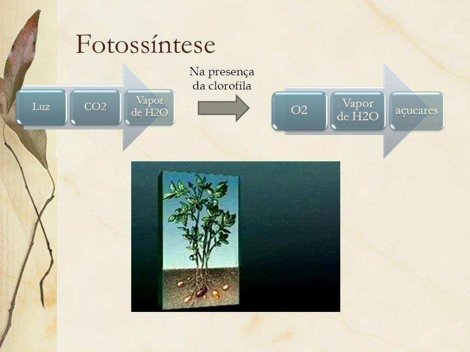 Fotossíntese LuzCO2 Vapor de H2O O2 Vapor de H2O açucares Na presença da clorofila