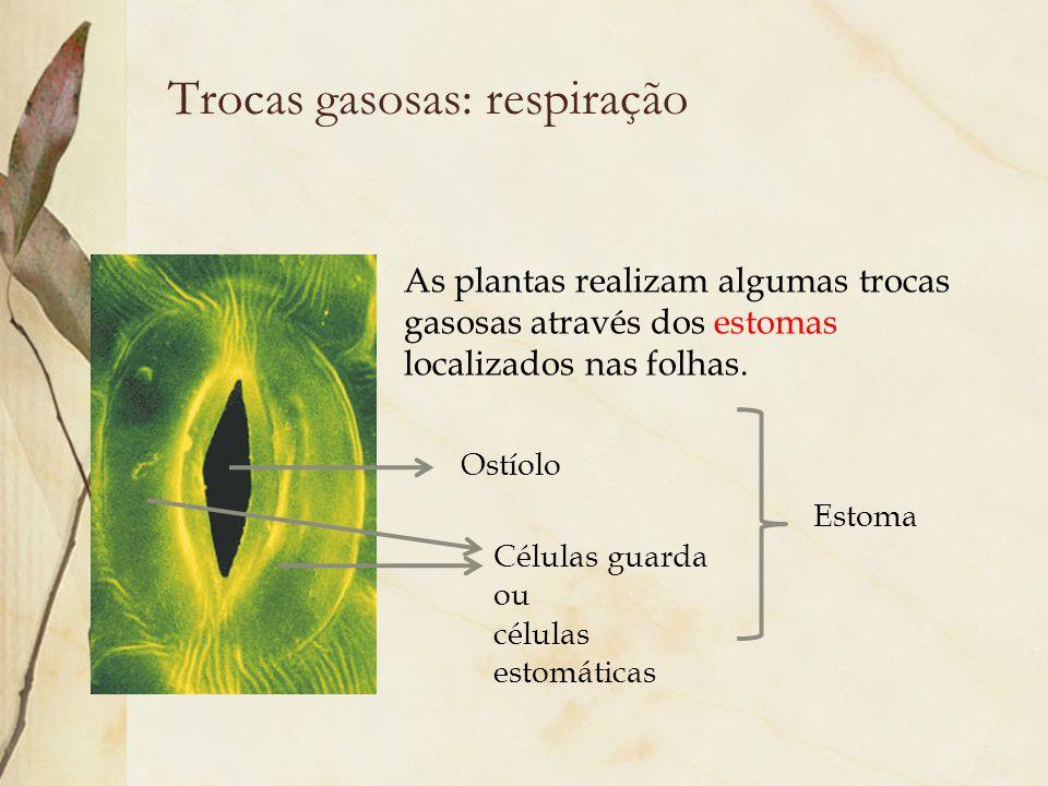 Trocas gasosas: respiração Ostíolo Células guarda ou células estomáticas As plantas realizam algumas trocas gasosas através dos estomas localizados na