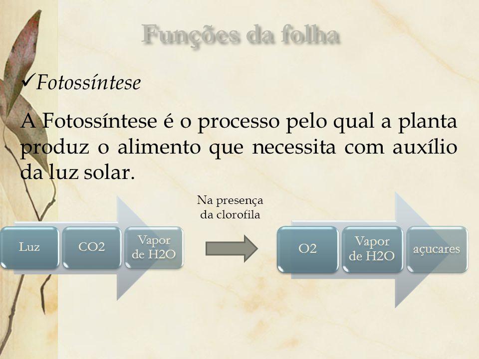 Fotossíntese A Fotossíntese é o processo pelo qual a planta produz o alimento que necessita com auxílio da luz solar. LuzCO2 Vapor de H2O O2 Vapor de
