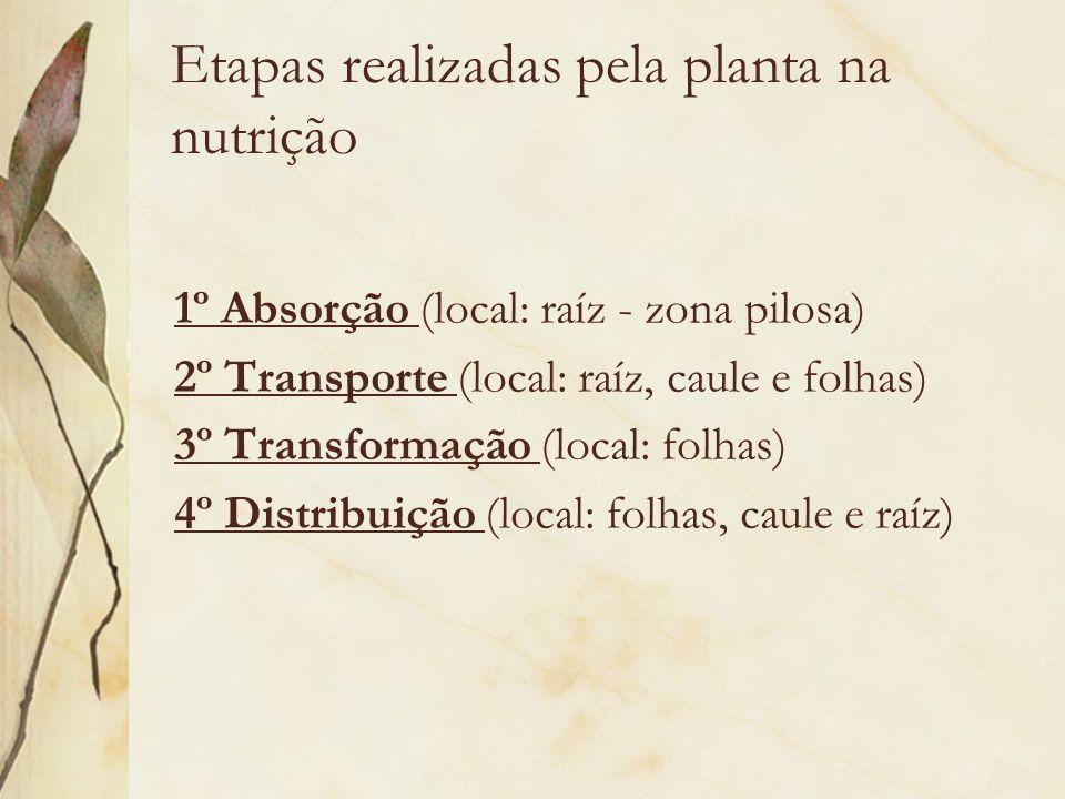 Etapas realizadas pela planta na nutrição 1º Absorção (local: raíz - zona pilosa) 2º Transporte (local: raíz, caule e folhas) 3º Transformação (local:
