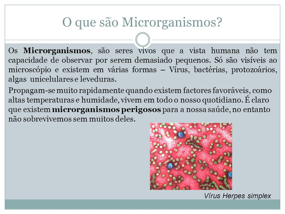 O que são Microrganismos? Os Microrganismos, são seres vivos que a vista humana não tem capacidade de observar por serem demasiado pequenos. Só são vi