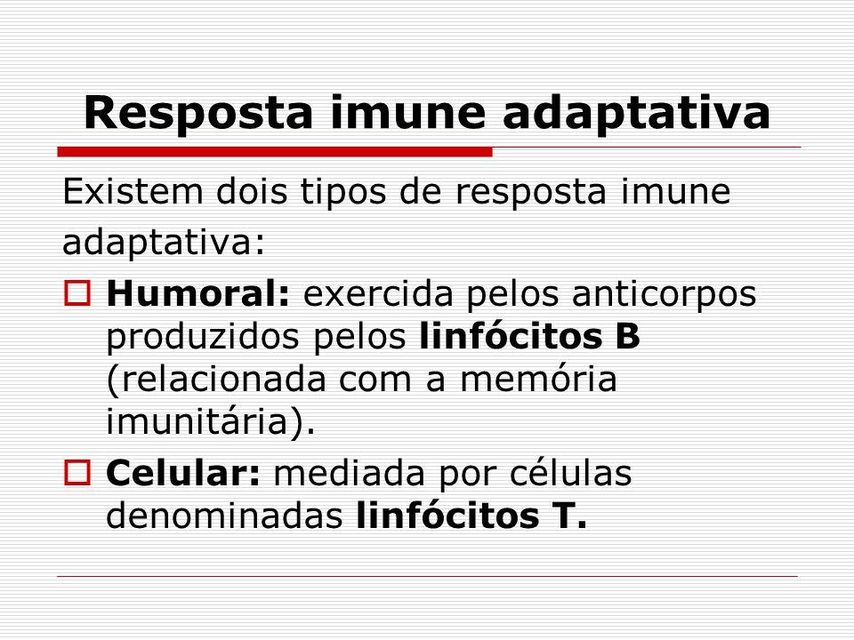Resposta imune adaptativa Existem dois tipos de resposta imune adaptativa:  Humoral: exercida pelos anticorpos produzidos pelos linfócitos B (relacio