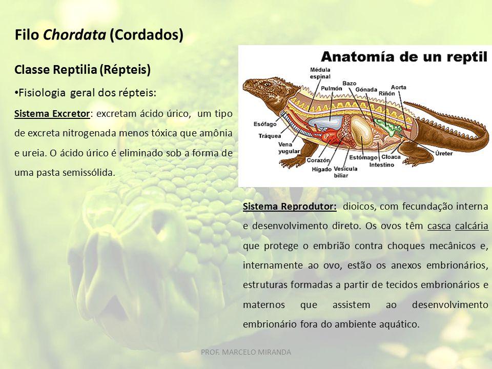 Classe Reptilia (Répteis) Fisiologia geral dos répteis: Sistema Excretor: excretam ácido úrico, um tipo de excreta nitrogenada menos tóxica que amônia e ureia.