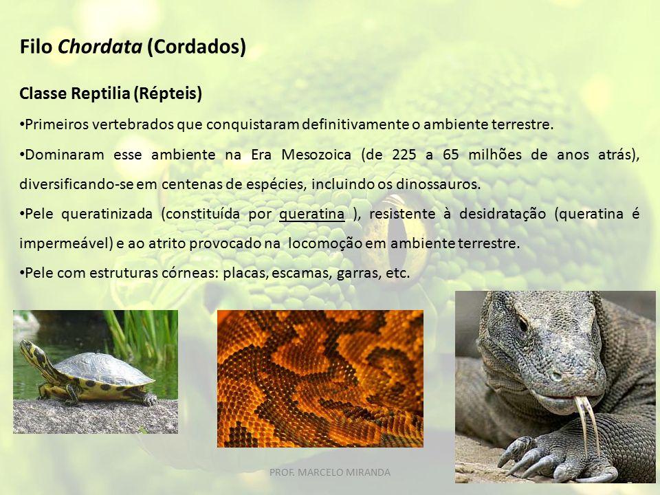 Classe Reptilia (Répteis) Primeiros vertebrados que conquistaram definitivamente o ambiente terrestre. Dominaram esse ambiente na Era Mesozoica (de 22