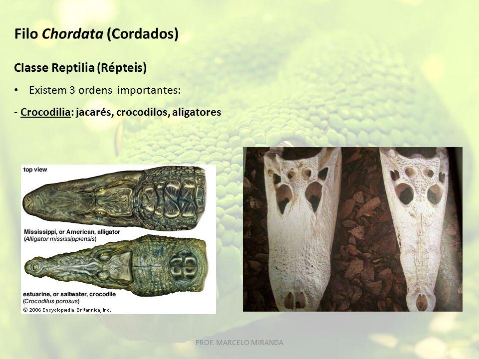 Classe Reptilia (Répteis) Existem 3 ordens importantes: - Crocodilia: jacarés, crocodilos, aligatores Filo Chordata (Cordados) PROF.
