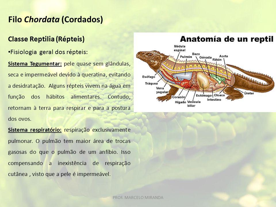 Classe Reptilia (Répteis) Fisiologia geral dos répteis: Sistema Tegumentar: pele quase sem glândulas, seca e impermeável devido à queratina, evitando a desidratação.