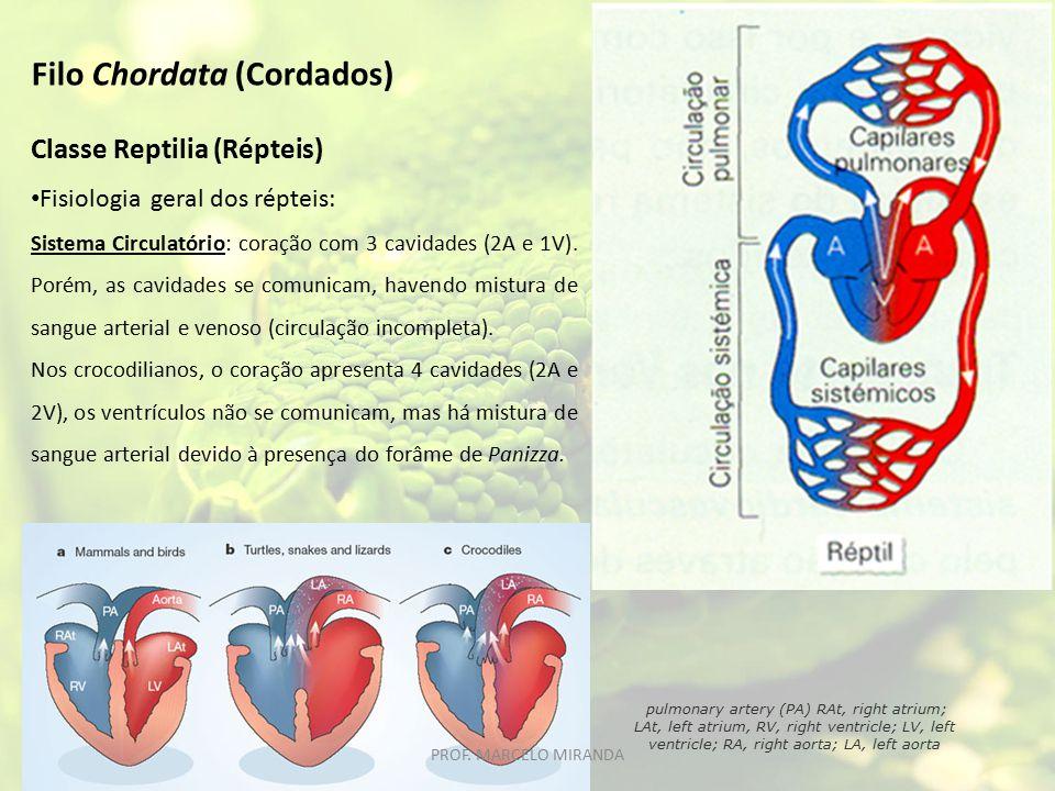 Classe Reptilia (Répteis) Fisiologia geral dos répteis: Sistema Circulatório: coração com 3 cavidades (2A e 1V). Porém, as cavidades se comunicam, hav