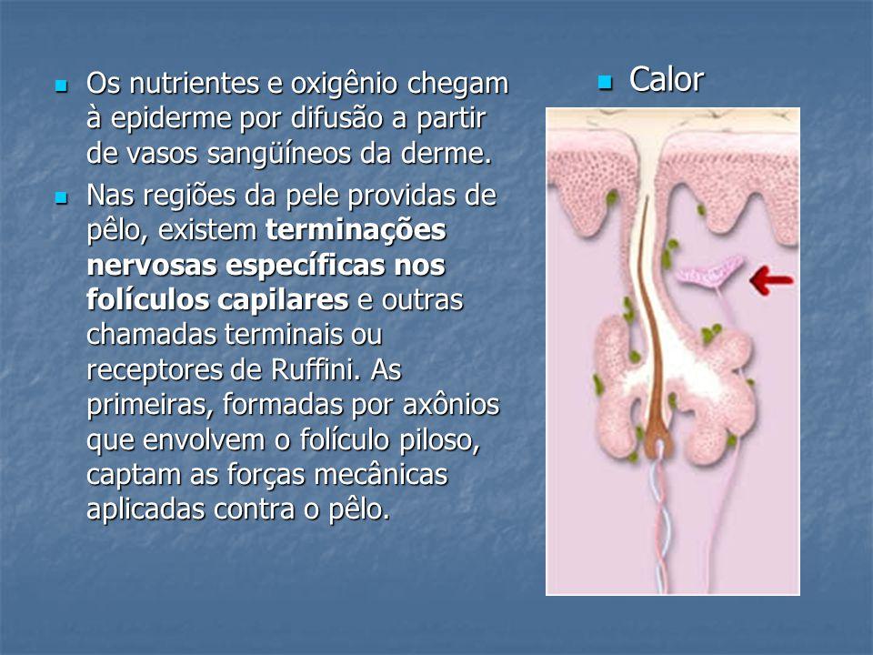 Os nutrientes e oxigênio chegam à epiderme por difusão a partir de vasos sangüíneos da derme. Os nutrientes e oxigênio chegam à epiderme por difusão a
