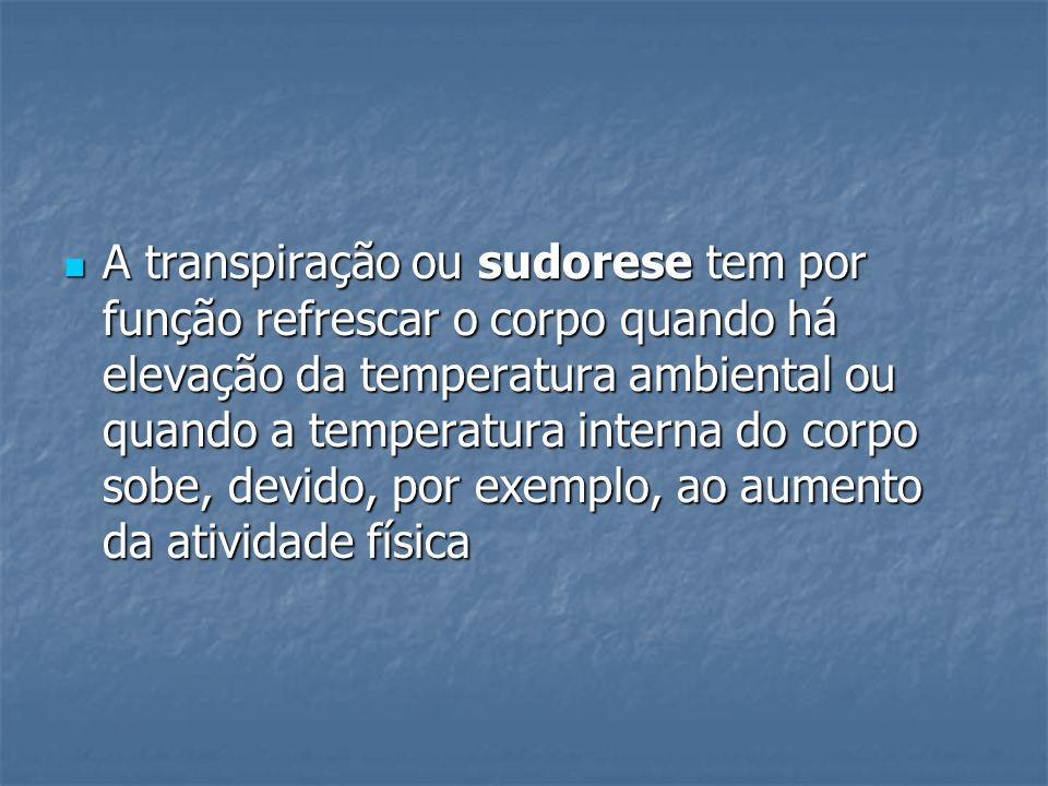 A transpiração ou sudorese tem por função refrescar o corpo quando há elevação da temperatura ambiental ou quando a temperatura interna do corpo sobe,