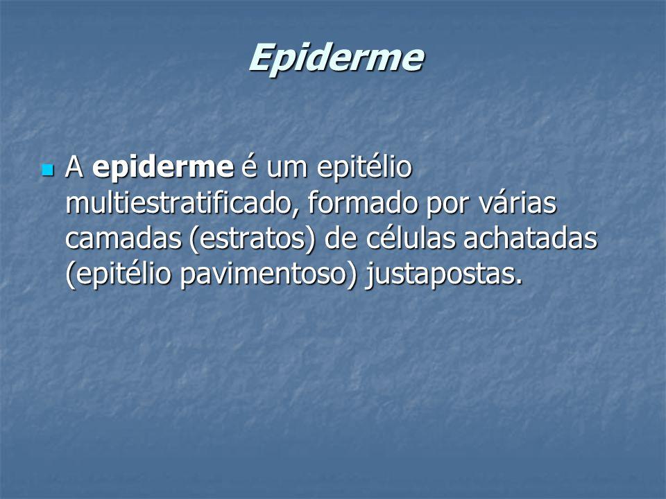 Epiderme A epiderme é um epitélio multiestratificado, formado por várias camadas (estratos) de células achatadas (epitélio pavimentoso) justapostas. A