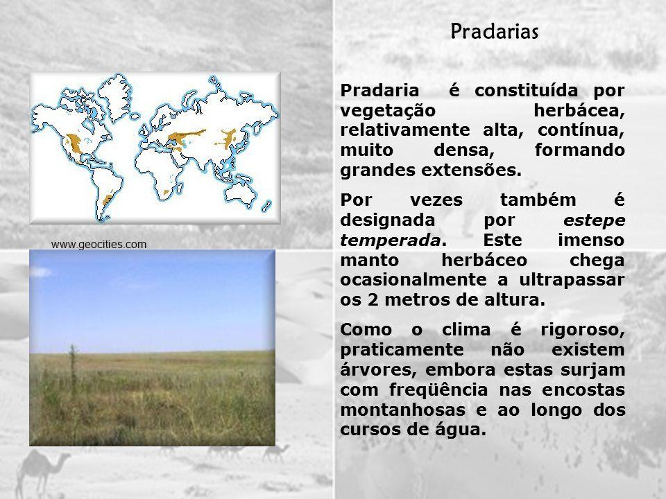 Pradaria é constituída por vegetação herbácea, relativamente alta, contínua, muito densa, formando grandes extensões.