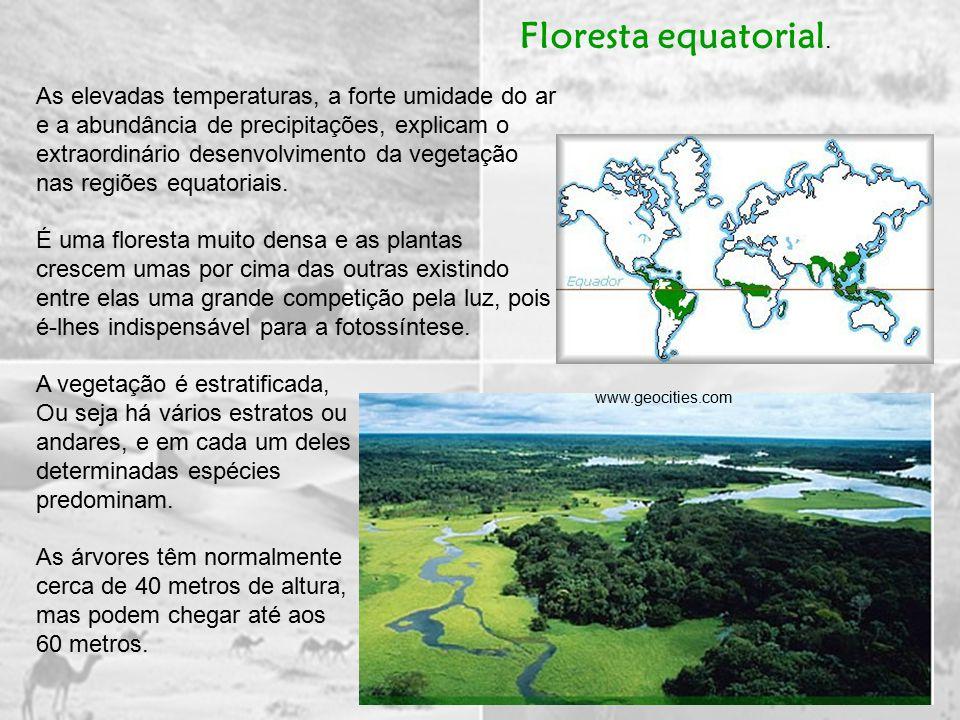 As elevadas temperaturas, a forte umidade do ar e a abundância de precipitações, explicam o extraordinário desenvolvimento da vegetação nas regiões equatoriais.