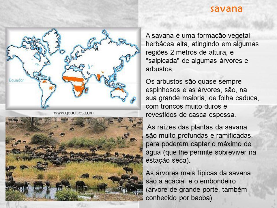 A savana é uma formação vegetal herbácea alta, atingindo em algumas regiões 2 metros de altura, e salpicada de algumas árvores e arbustos.