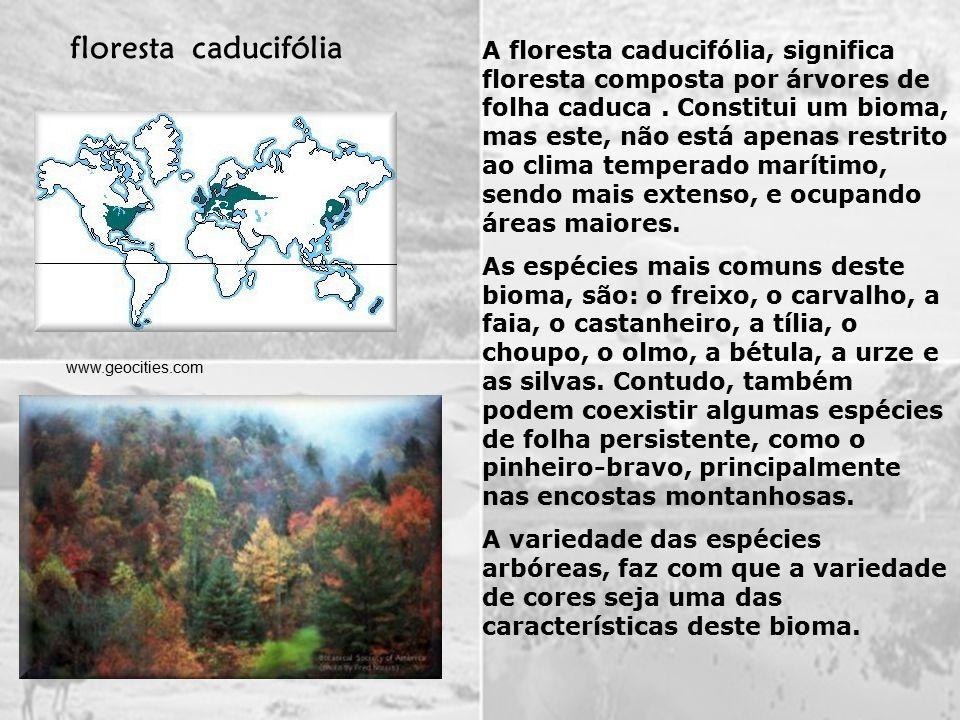 A floresta caducifólia, significa floresta composta por árvores de folha caduca.