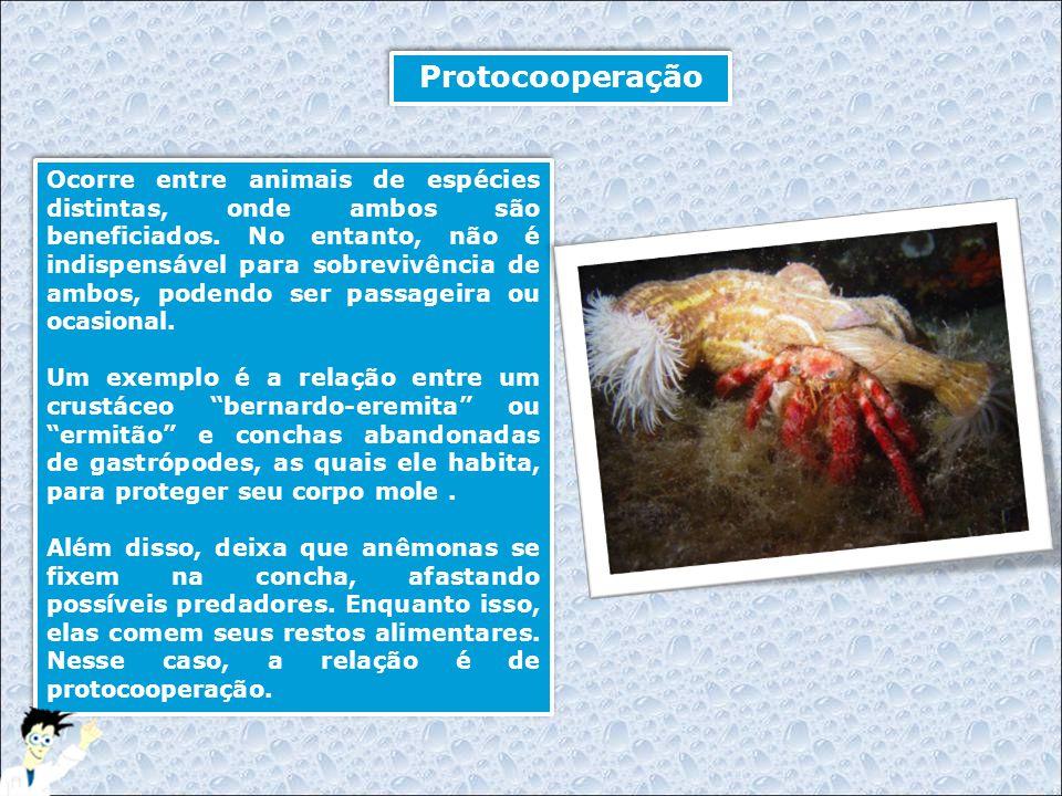 Protocooperação Ocorre entre animais de espécies distintas, onde ambos são beneficiados. No entanto, não é indispensável para sobrevivência de ambos,
